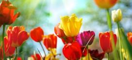 Simbolika poročnega cvetja